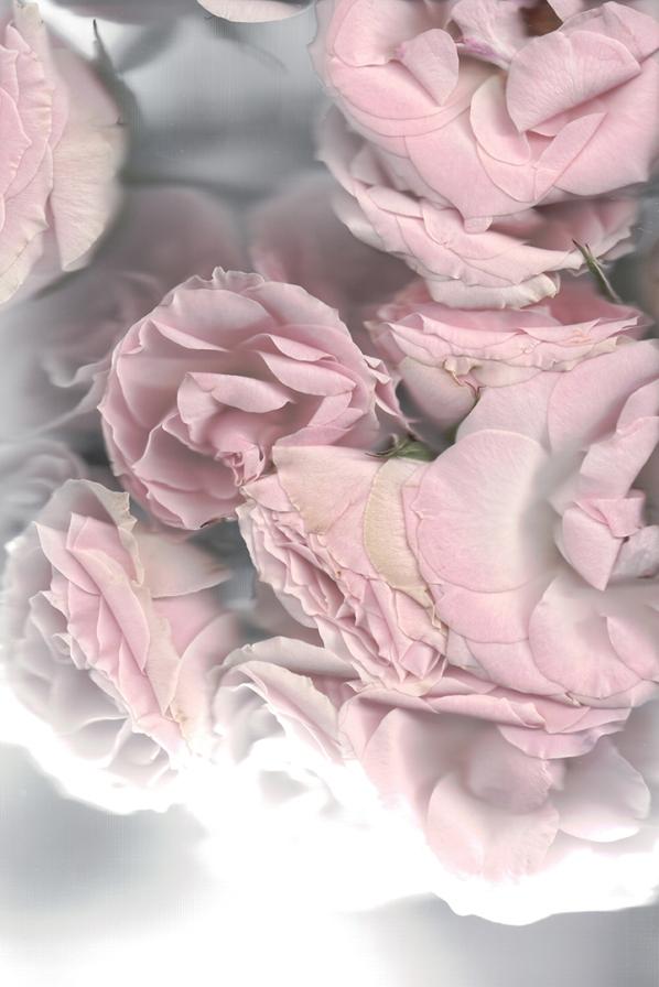 FLOWERsmallWEB